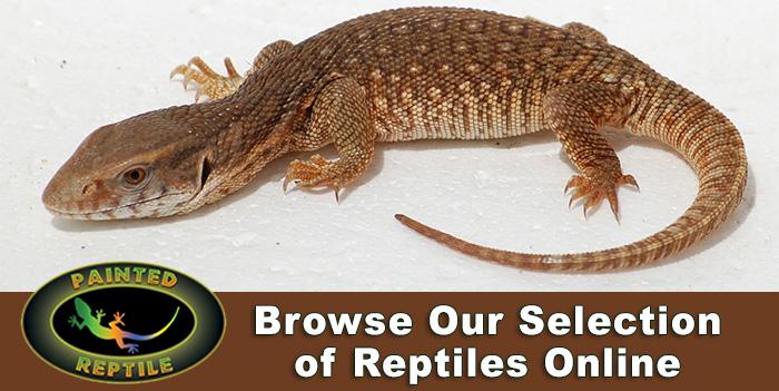 Raising Captive Bred Reptiles