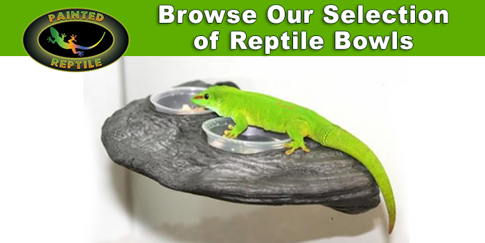 Selecting Water Bowls for Reptiles