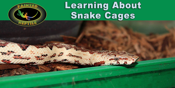 Learning About Snake Cages