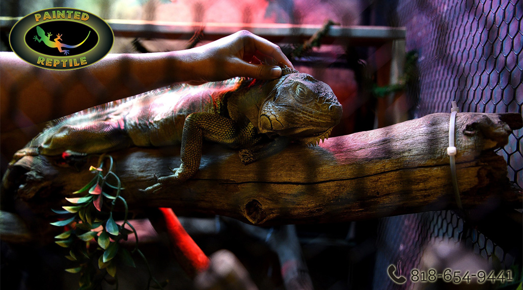 Can Places Ship Live Reptiles