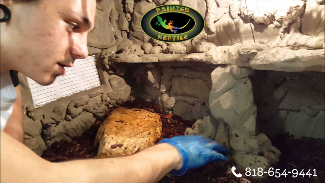 Basics about Reptile Enclosures