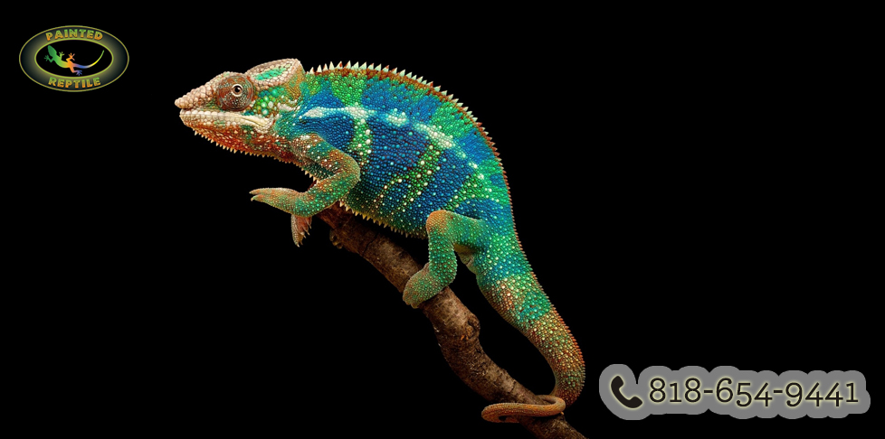 Photo of Chameleons are Colorful and in Demand