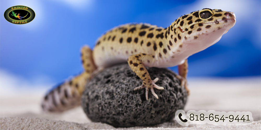 Photo of Reptile Enclosures Tips for Beginners