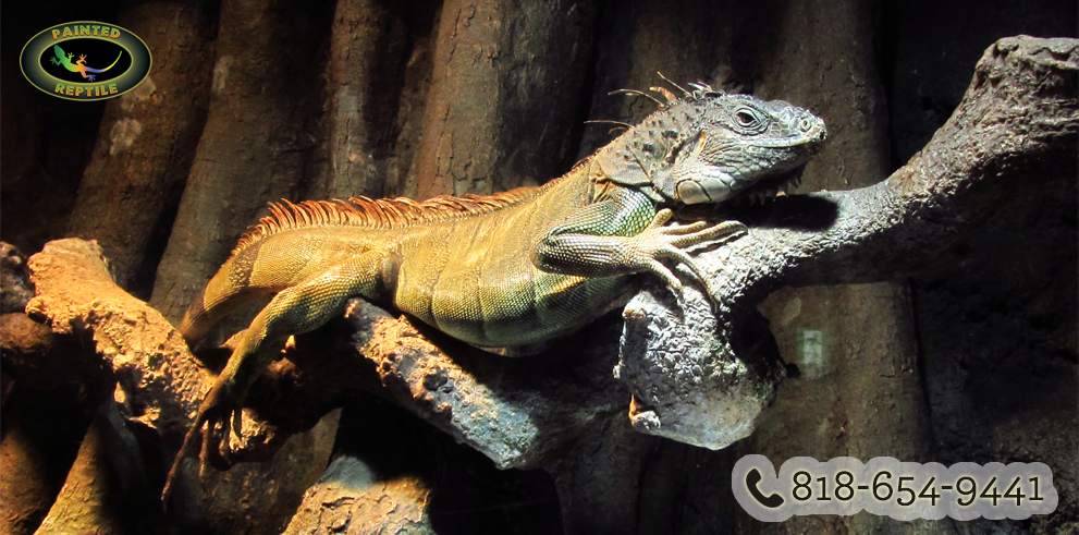 Reptile Enclosures Tips for Beginners