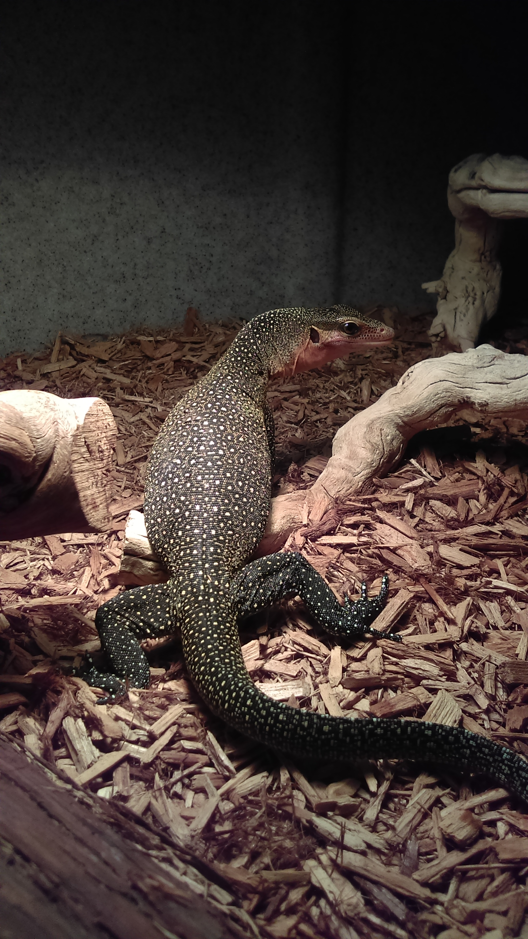 Photo of Have Safe and Healthy Pets with Proper Reptile Enclosures