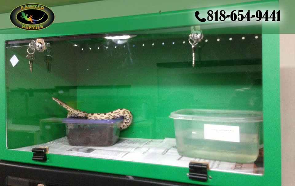 Photo of Why You Need Proper Reptile Cages