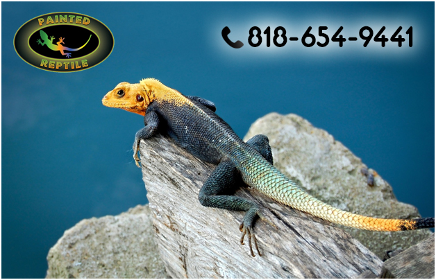 Where to Find Low Price Reptile Products