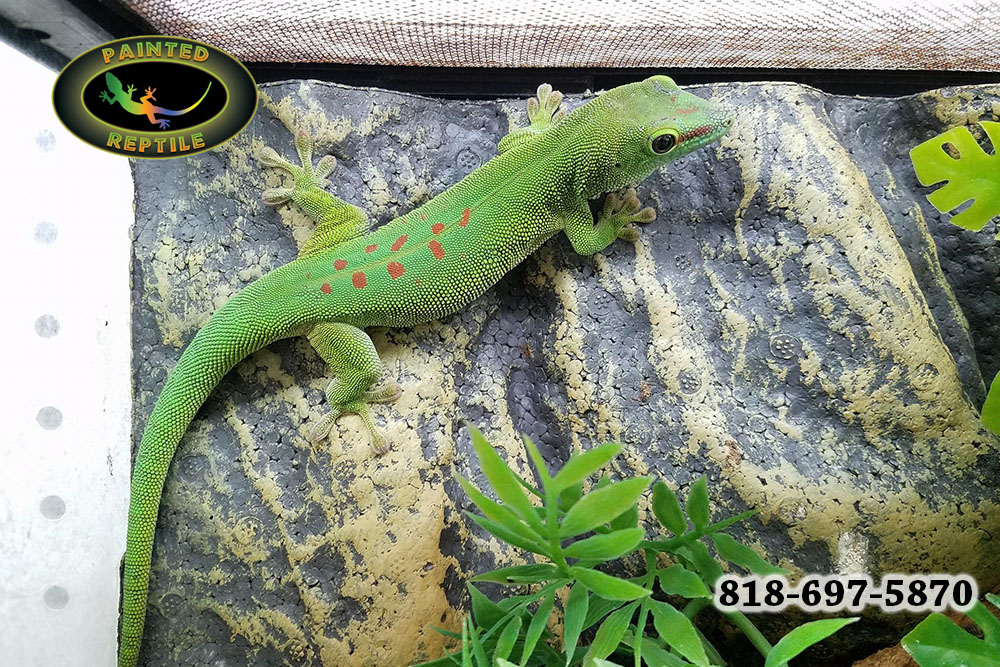 best reptile breeding supplies