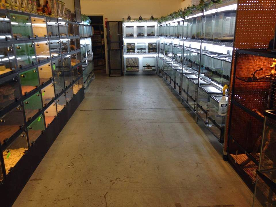 Photo of Keep Your Pet Happy with Reptile Supplies in Reseda