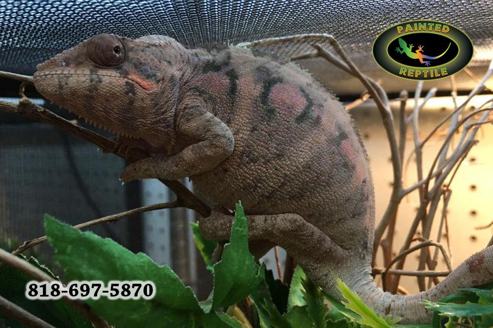 Let Your Reptiles Live in Custom Creature Condos