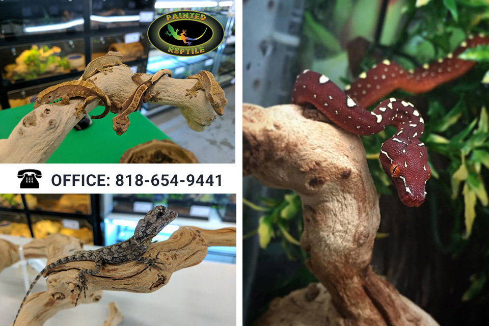 Find a Shop for Reptile Supplies in Reseda