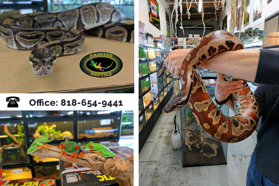 Get the Best Reptile Supplies in Los Angeles from Us