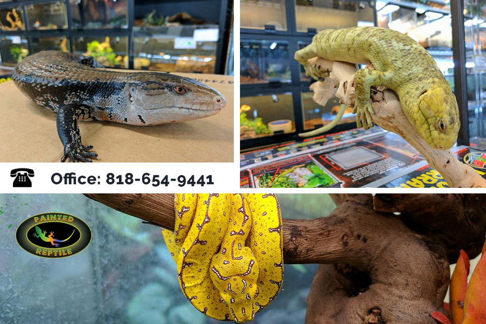 Where to Find Low Price Reptile Products for Your Pets