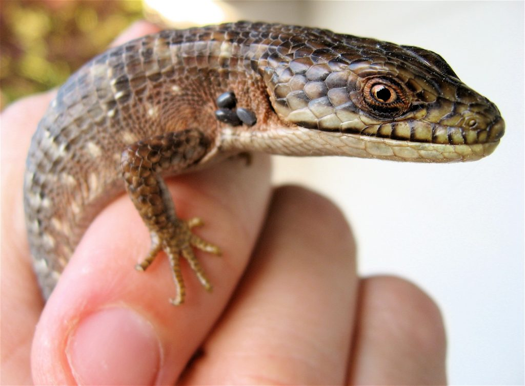 best reptile breeding racks