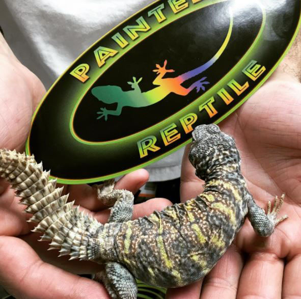 Van Nuys Reptile Store That Carries Reptile Supplies