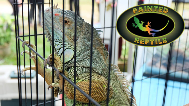 Find Stackable Reptile Cages