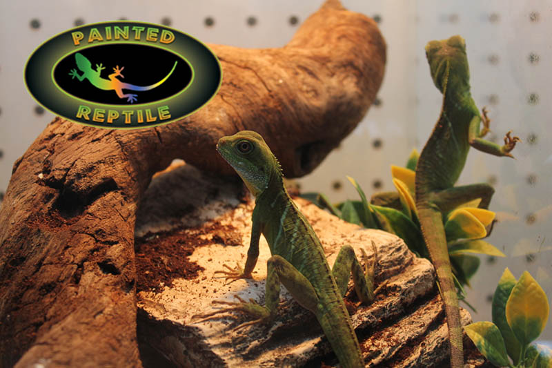 Reptile Husbandry Supplies