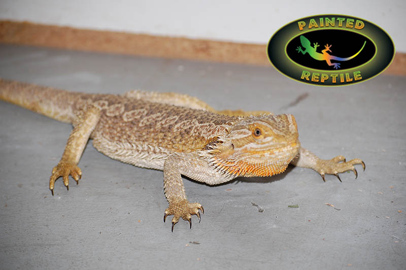 Photo of Quality Reptile Equipment You Need for Your Pet