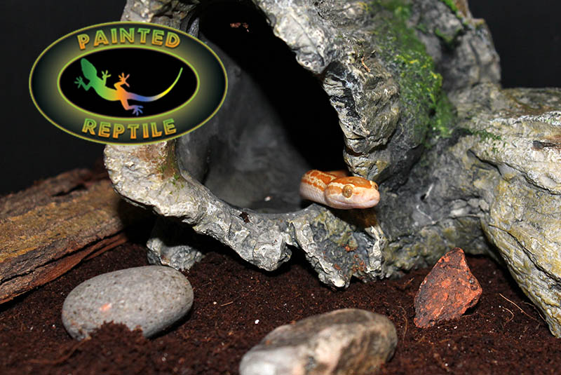 Safe Substrate for Reptiles