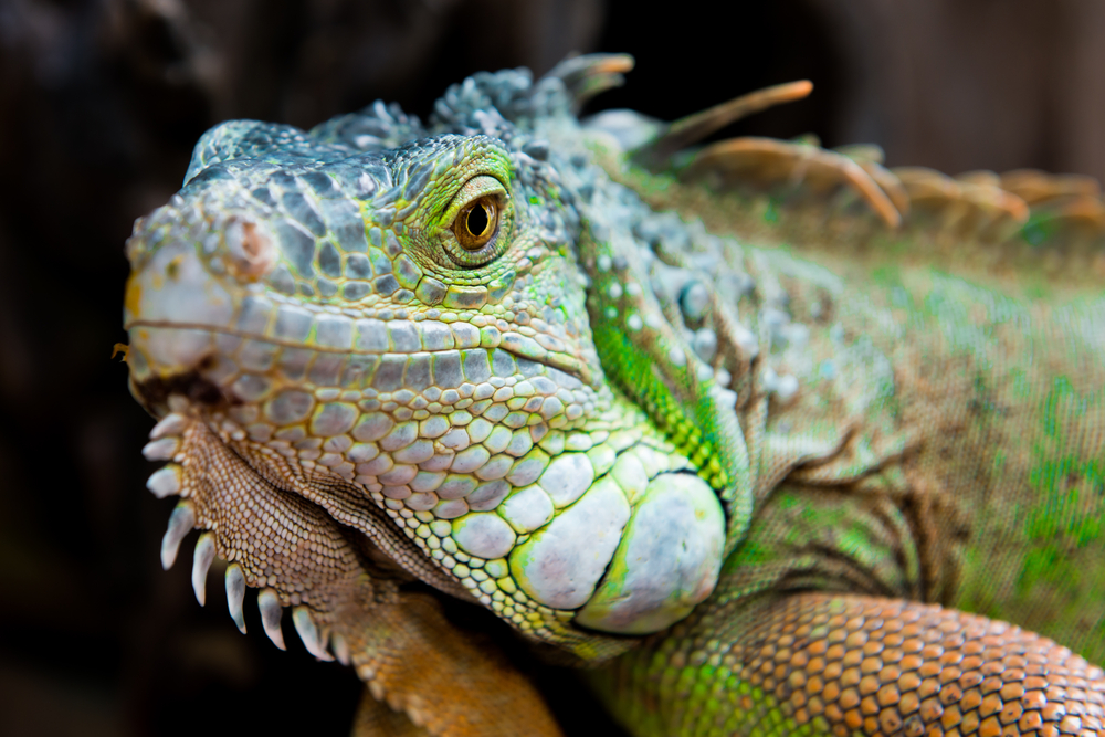 online reptile supply store